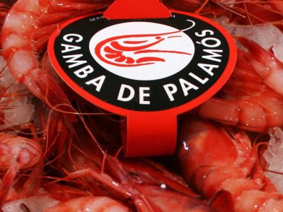 Palamós red shrimp guided tour with tasting
