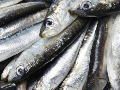 Oily fish. Guided tour with tasting